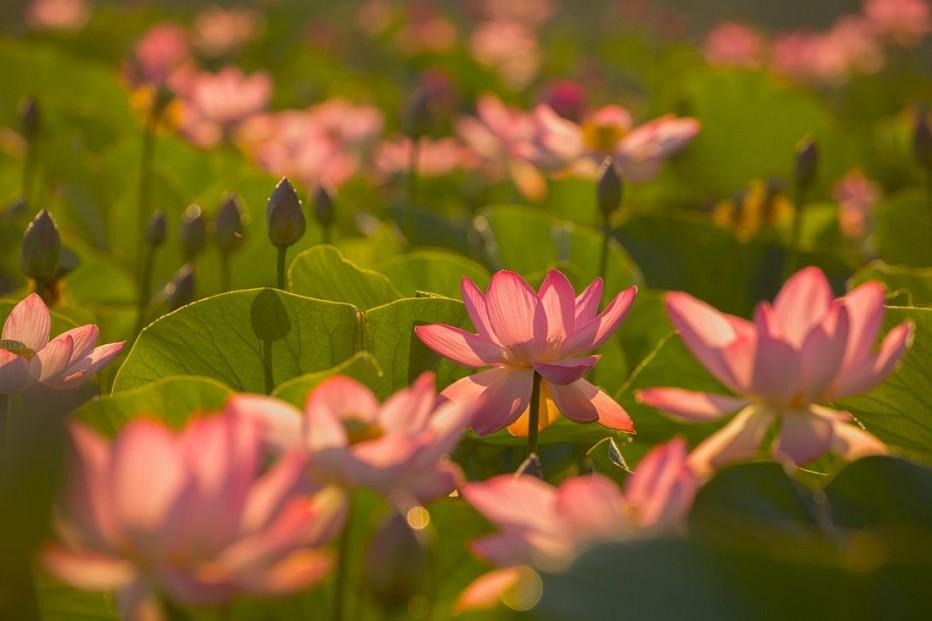 Познавательный час «Там, где лотос цветёт»