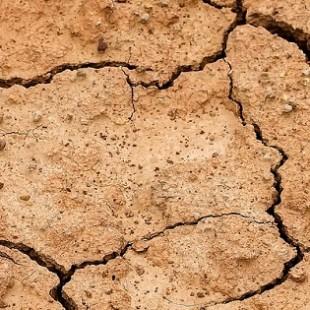 Всемирный день борьбы с опустыниванием и засухой | Экологический калейдоскоп «Живые синоптики: растения-барометры, растения-часы»