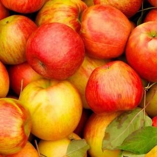 Праздник с яблочным ароматом