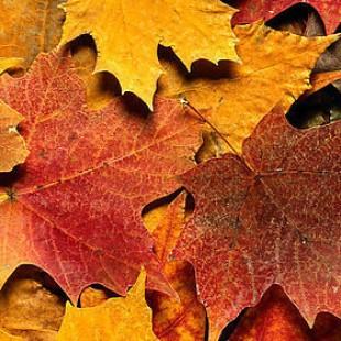 Творческая полянка «Осенний листопад»