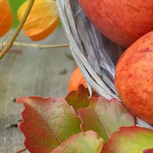 Конкурсная программа «Молодильное яблочко»