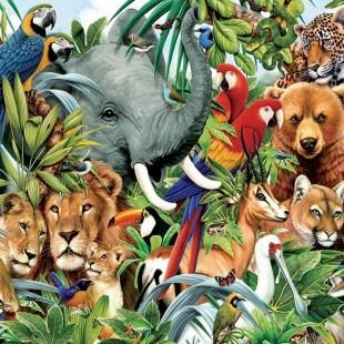 День информации «Тропою мира – в мир животных»