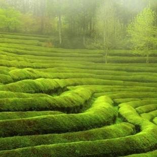 Экологический квест «Лабиринты природы»