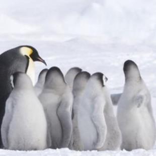День полярного кино