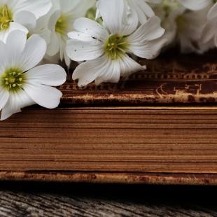Литературный час «Легенды о цветах»